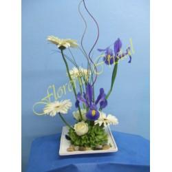 Iris y gerberas
