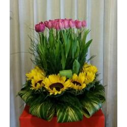 Canasto con 36 tulipanes...
